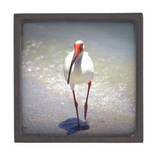 White Ibis Strut Gift Box