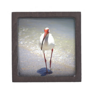 White Ibis Strut Keepsake Box
