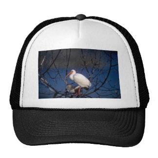 White Ibis Trucker Hat