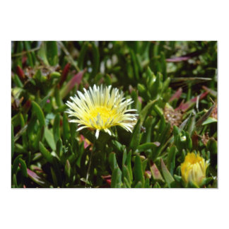 White Ice Plant Blossom flowers Announcements