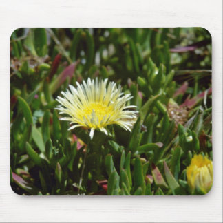 White Ice Plant Blossom flowers Mouse Pad