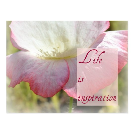 White Iceland Poppy- Life is Inspiration Post Card