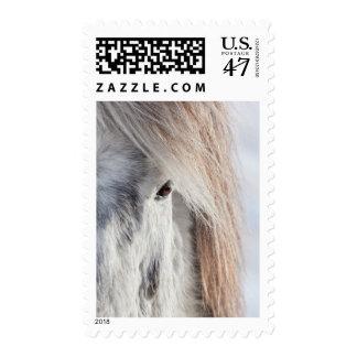 White Icelandic Horse face, Iceland Postage
