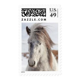 White Icelandic Horse Headshot Postage