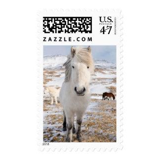 White Icelandic Horse, Iceland Postage