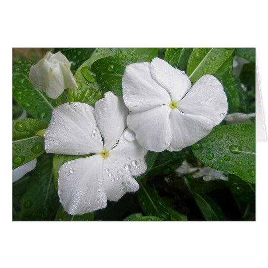 White Impatiens Flowers Card