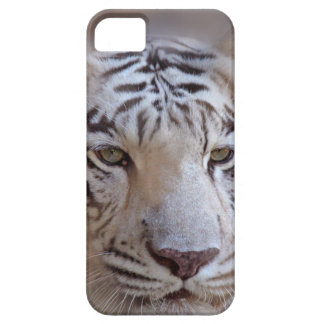 White Indian Bengal Tiger iPhone 5 Cover