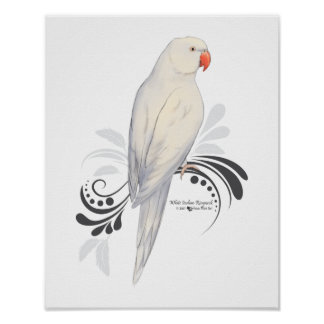White Indian Ringneck Parrot Poster