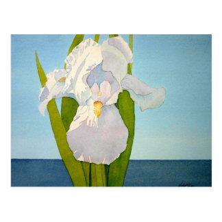 White Iris2 Postcard