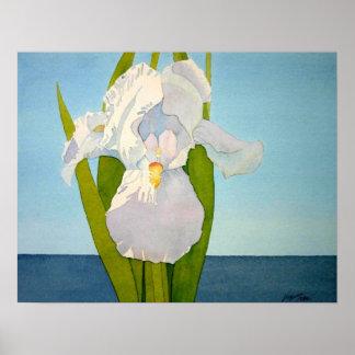 White Iris2 Print