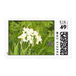White Iris 2 Postage Stamps