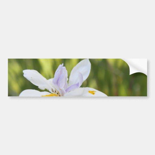 White Iris Bumper Sticker