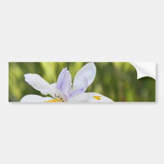 White Iris Bumper Sticker Car Bumper Sticker