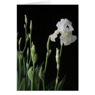 White Iris In Dark Of Night Card