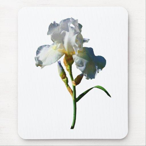 White Iris in Sunshine Mouse Pad