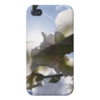 White Iris iPhone 4/4S Cases