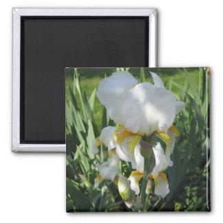 White Iris Mgnet 2 Inch Square Magnet