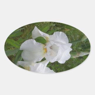 White Iris Oval Sticker