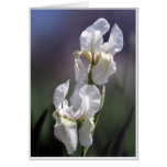 White Iris Pair Card