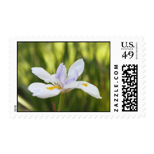 White iris Postage