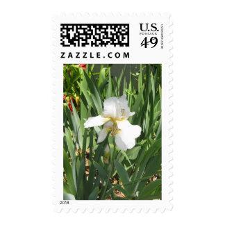 White Iris Postage Stamps