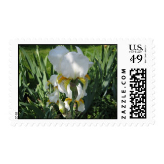 White Iris Stamp