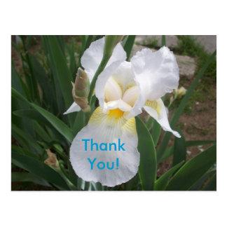 White Iris Thank You! Postcard