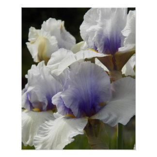 White Irises Floral Poster