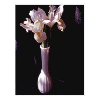 White Irises In White Vase Postcard