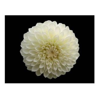 White Jomanda (Dahlia) Postcard