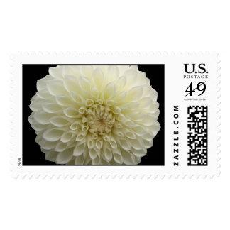 White Jomanda Flower Stamps