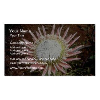white King protea Protea cynaroides flowers Business Card