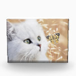 """White kitten and butterfly acrylic award<br><div class=""""desc"""">Lady India and Princess Iona are featured in these kitten images. They belong to a friend Shannon and are absolutely  gorgeous and playful.  A privilege to photograph. This is a composition.</div>"""