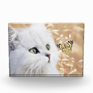 White kitten and butterfly acrylic award