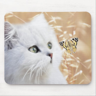 White kitten and butterfly mouse pad