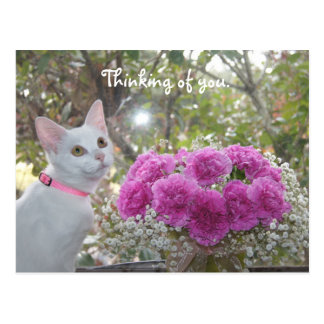 White Kitten and Pink Carnations Postcard
