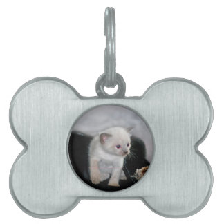 White kitten and the boot pet ID tag