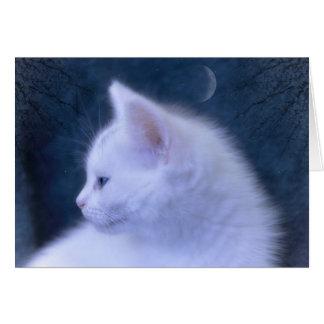 White Kitten at Night Card