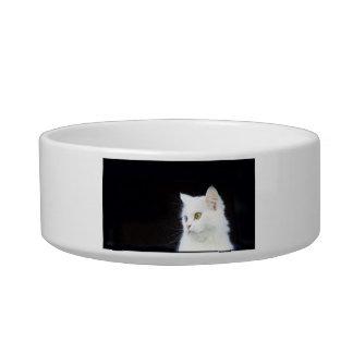White kitten Cat Bowl