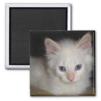 White Kitten Magnet magnet