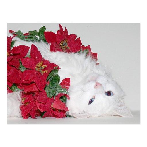 White kitty Christmas Postcard