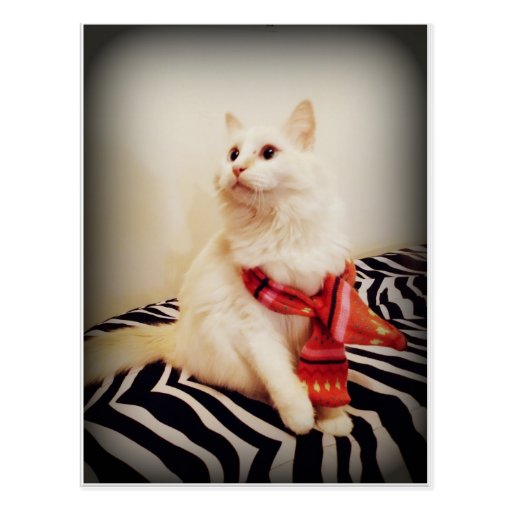 white kitty in scarf postcard