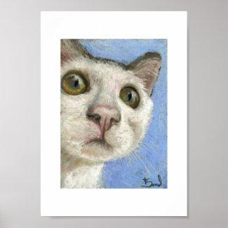White kitty print print