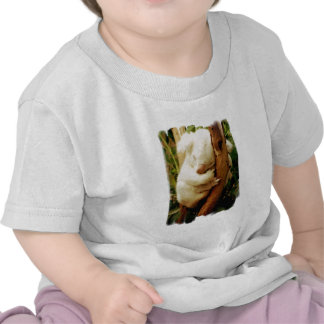 White Koala Bear Baby T-Shirt