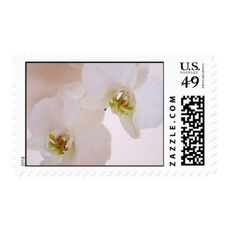 White lady phalaenopsis butterfly orchid postage