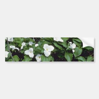 white Large-Flowered Trillium Trillium Grandiflor Bumper Sticker