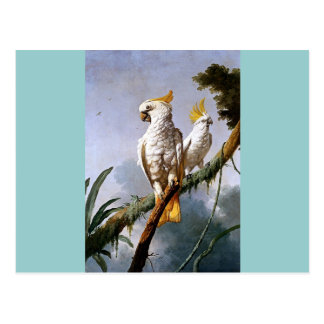 White Leadbeaters Parrots Tropical Birds painting Postcard