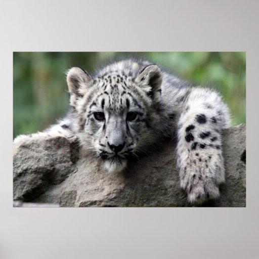 white Leopard poster