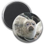 White Leopard Seal Magnet Magnets