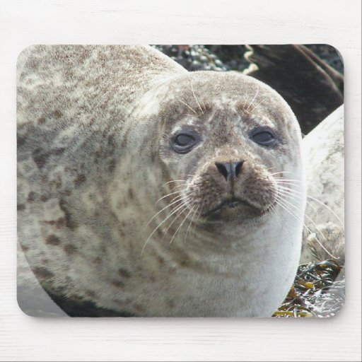 White Leopard Seal Mouse Pad
